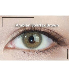 Western Eyes - Arabian Spartax - Brown - Power